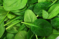 Leaves of  spinach Royalty Free Stock Photo