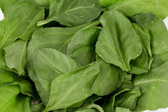 Leaves of spinach Royalty Free Stock Image