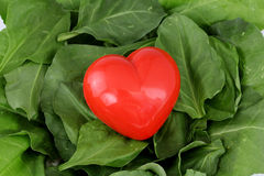 Leaves of spinach Red heart shape on Stock Photos