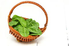 Leaves of spinach. A wicker basket with a handle full of fresh spinach over wooden background. Shallow DOF royalty free stock photography