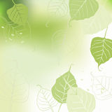 Leaves, spring - vector background Stock Photo