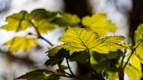 Leaves in springtime Stock Images