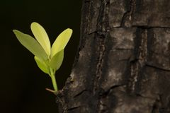 Leaves sprouting from the big trees. DOF shallow. This image shooting in garden Stock Images