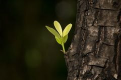 Leaves sprouting from the big trees. DOF shallow. This image shooting in garden Stock Image