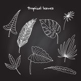 leaves ställde in tropiskt Vektor Illustrationer
