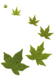 leaves Stages of life Royalty Free Stock Image