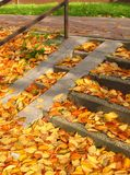 Leaves on the stairs Royalty Free Stock Photography