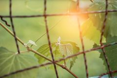 Leaves on fence in park. Royalty Free Stock Photography