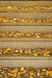 Leaves on Steps. There are fall leaves on the steps Royalty Free Stock Images