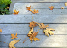 Leaves on Steps Royalty Free Stock Image