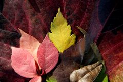 Leaves still of autumn leaves, dark background Royalty Free Stock Photos