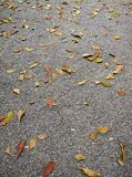 Leaves on stone ground. Royalty Free Stock Image