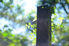 Leaves with stone pillar in backlight Stock Images