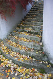 Leaves on Stone Steps Royalty Free Stock Images