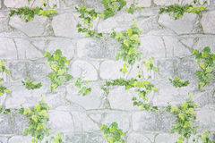 Leaves on stone wallpaper Stock Image