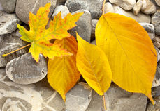Leaves on stones Royalty Free Stock Images