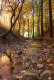 Leaves into the stream. Stream covered with red leaves in autumn Stock Photos
