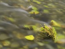 Leaves in a stream Royalty Free Stock Photo