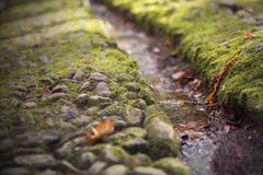 Leaves in the stream Stock Photography