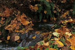 Leaves covering a ditch feeding a river Stock Image