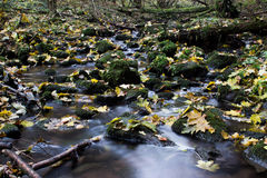 Leaves in stream royalty free stock photo