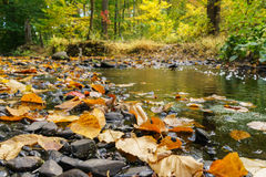 Leaves on stream water, Autumn. Autumn leaves in the foreground, wide angle shot Royalty Free Stock Photography