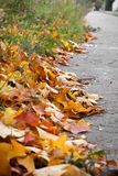 Leaves on street royalty free stock photo
