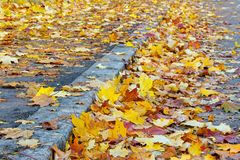 Leaves on the street royalty free stock photo