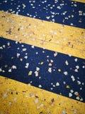 Zebra crossing in autumn stock photos