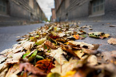 Leaves on street on autumn day Royalty Free Stock Photo