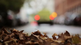Leaves on the street - autumnal urban scene, traffic and cars in the background stock video footage