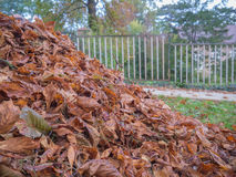 Leaves on the street. Dry autumn leaves in the street Stock Photography