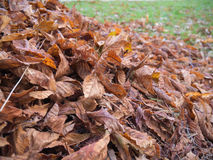Leaves on the street. Dry autumn leaves in the street Stock Image