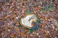 Leaves and stump. Royalty Free Stock Image