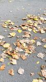 Leaves in summertime Royalty Free Stock Photography