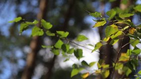 The leaves stock footage