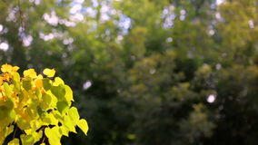 The leaves stock video