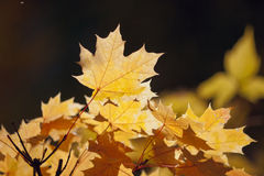 Leaves in the sun. Royalty Free Stock Images