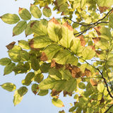 Leaves and sunlight burst Royalty Free Stock Photos