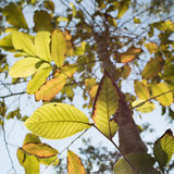 Leaves and sunlight burst Stock Photography