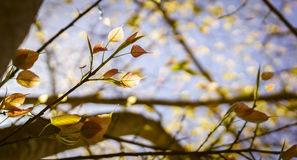 Leaves and sunlight Royalty Free Stock Photography