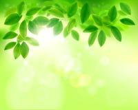 Leaves in sunlight. Vector illustration. vector illustration