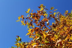 Leaves. In the sunny day in the autumn Stock Photography