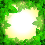Leaves sunny frame Royalty Free Stock Photos