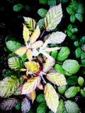 Leaves in sunny garden
