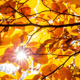 Leaves and a sunstar Royalty Free Stock Photos