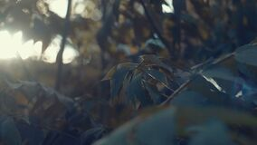 Leaves swaying in the wind.  stock video