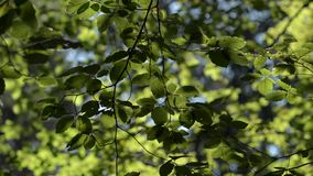 Leaves swaying in the wind stock footage