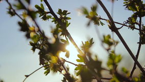 Leaves swaying in the wind in the sun stock video footage