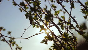 Leaves swaying in the wind in the sun stock video